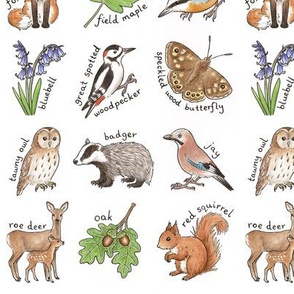 British Woodland Wildlife