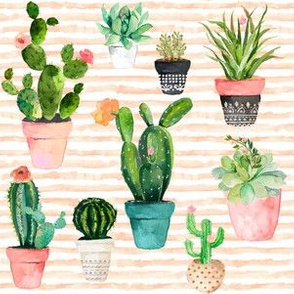 "6"" Cactus Obsession / Peach Stripes"