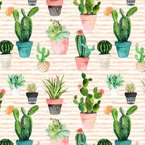"4"" Cactus Obsession / Peach Stripes"
