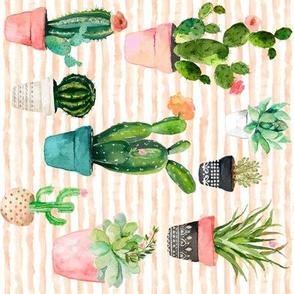 "8"" Cactus Obsession / Peach Stripes / 90 degrees"