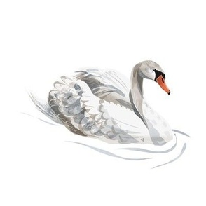 Lovely Swan on White
