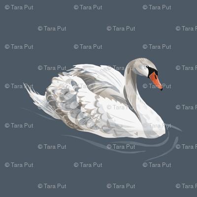 Lovely Swan on Blue