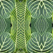 Rgreen_croton_leaves_6-5-2017_shop_thumb