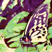 Butterfly Lands1