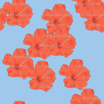 Orange Hibiscus on Sky Blue