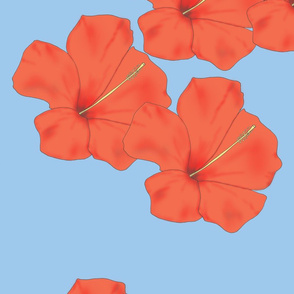 Orange_Hibiscus_on_Sky_Blue_flat