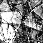 Shards, WHITE