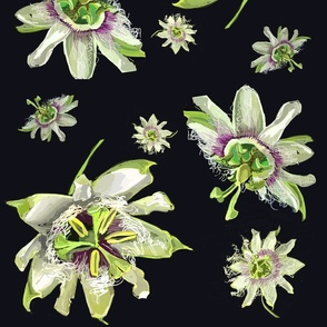 Passion_flowers_1