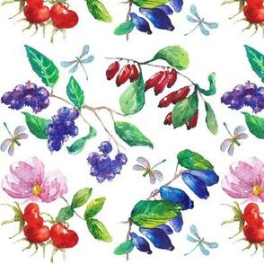 fruit_bushes_watercolor2