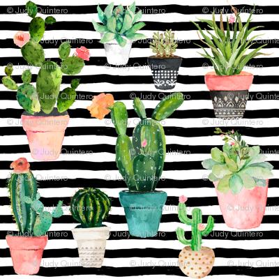 "4"" Cactus Obsession / Black & White Stripes"