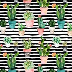 "4"" Cactus Obsession / Black & White Stripes"