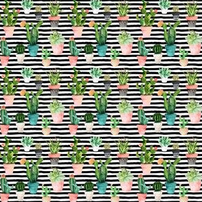 "2"" Cactus Obsession / Black & White Stripes"