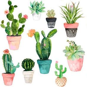 "8"" Cactus Obsession / White"