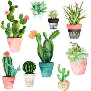 "6"" Cactus Obsession / White"
