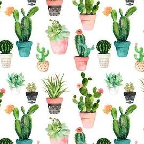 "4"" Cactus Obsession / White"