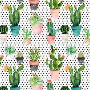 "4"" Cactus Obsession /Black & White / Polka Dots"