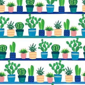 cacti_stripe