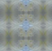 DSCN2586_Macro_Rose_Droplet_Pattern