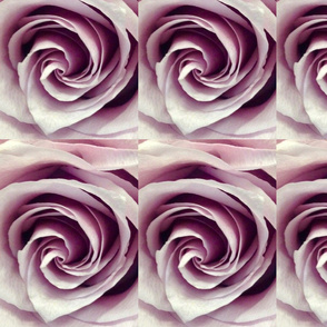 Ice Mauve Rose Wallpaper and Fabric