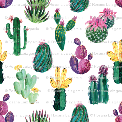 Colorful cacti and succulents