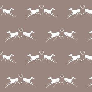 white greyhounds, white, brown