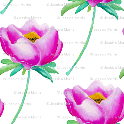 Pink Peonies, White (Medium)