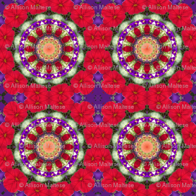 Royal Red Mandala 0955