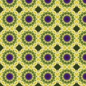 Yellow Petunia Pinwheels 0958