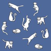 Various Cats