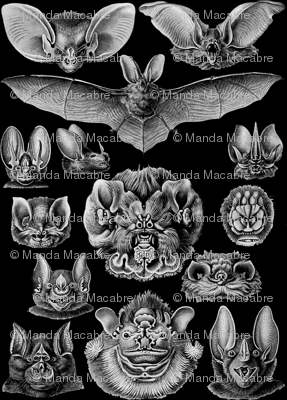Bats__4__black_preview