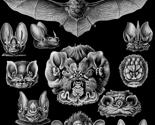 Bats__4__black_thumb