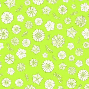 Astrophytum Green