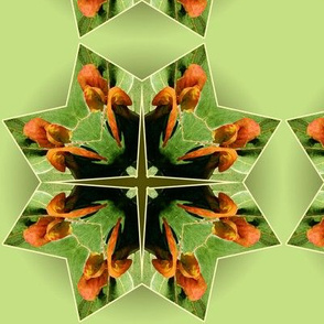 Organic_Geometry_4_lt_green_white
