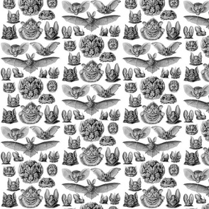 Ernst Haeckel Bats