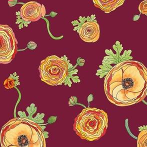 Ranunculus - Burgundy