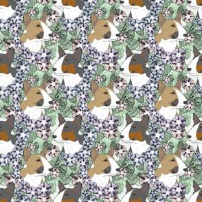 Floral Miniature colored Bull Terrier portraits B