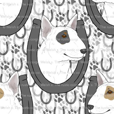 Miniature white Bull Terrier horseshoe portraits B