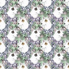 Floral Miniature white Bull Terrier portraits B