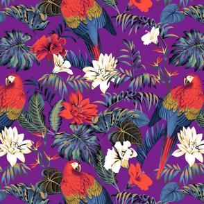 Paradise Parrot - Purple