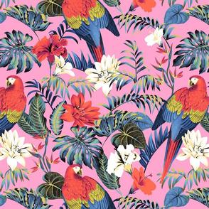 Paradise Parrot - Pink