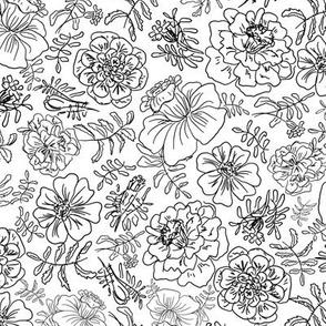 Marigolds_black on white