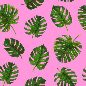monstera on pink background