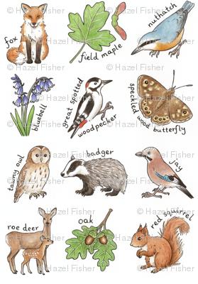 British Woodland Wildlife - smaller scale