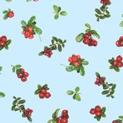cranberries_light blue background