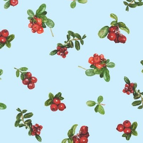 cranberries_light blue background