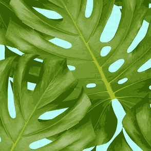 monstera_bright