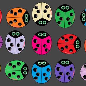 ladybug-multi (insect)