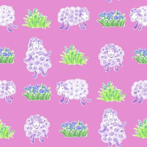 sheep purple