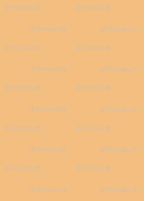 Dusky Apricot Solid Colour