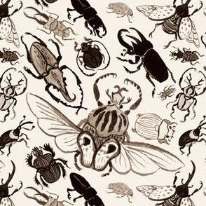A Gathering of Beetles
